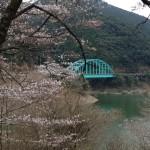 水上村 桜の里健康マラソン2013